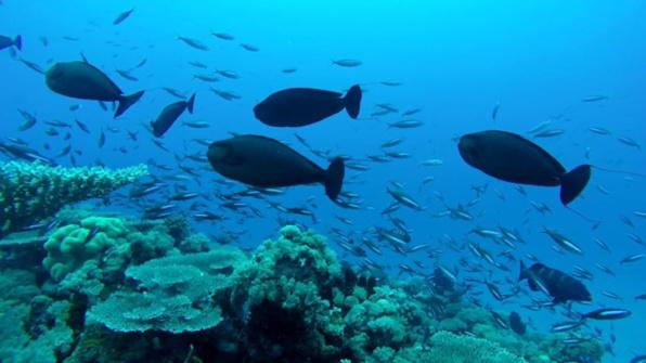 Cartographie des habitats marins et état de santé des récifs coralliens : nouvelles campagnes scientifiques du Xe FED