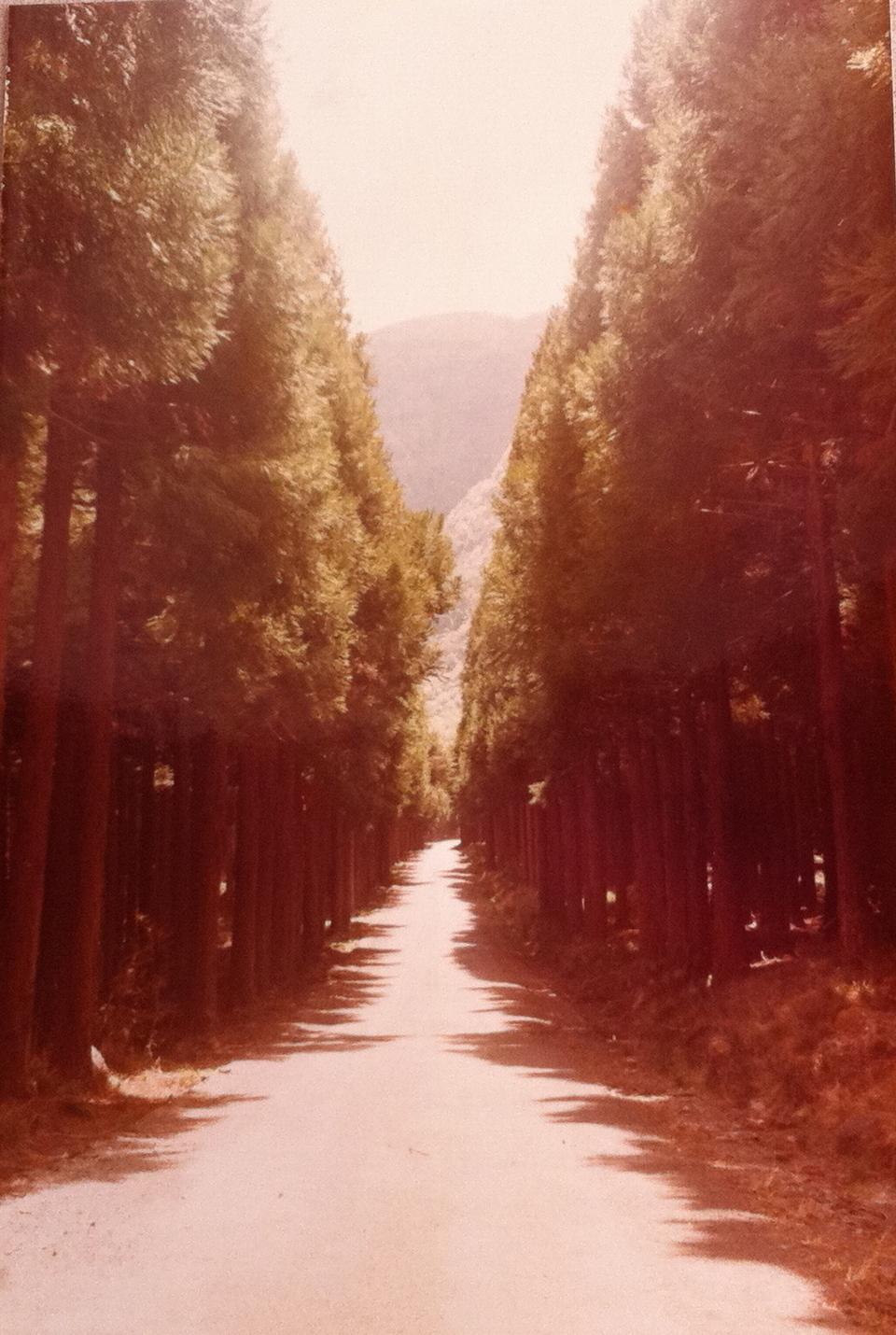 Chemin Grand bois sa lé longue!