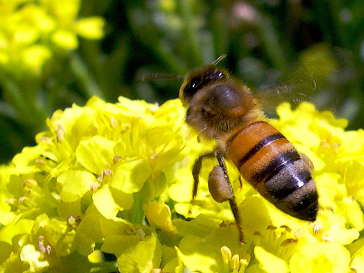 Une pétition pour sauver des abeilles