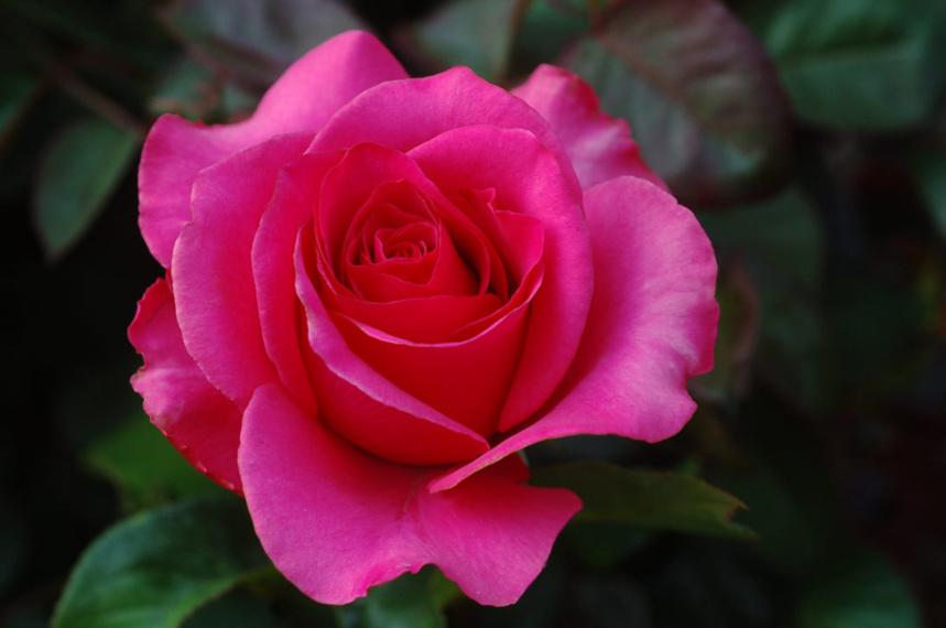 Les bébés naissent dans les roses, surtout pour les couples de même sexe