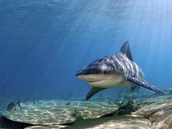 Risques requins : recours du ministère de l'Intérieur contre la décision du TA