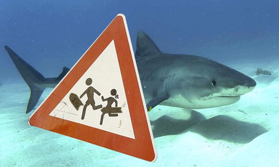 Requin : Pour éviter que la situation ne s'aggrave...
