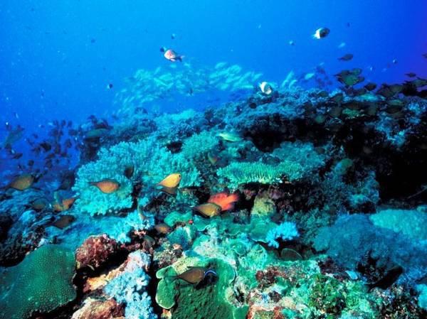 Atelier régional sur les espèces marines envahissantes