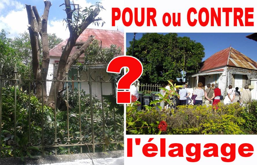 ENTRE-DEUX : Peut-on encore élaguer les arbres ?