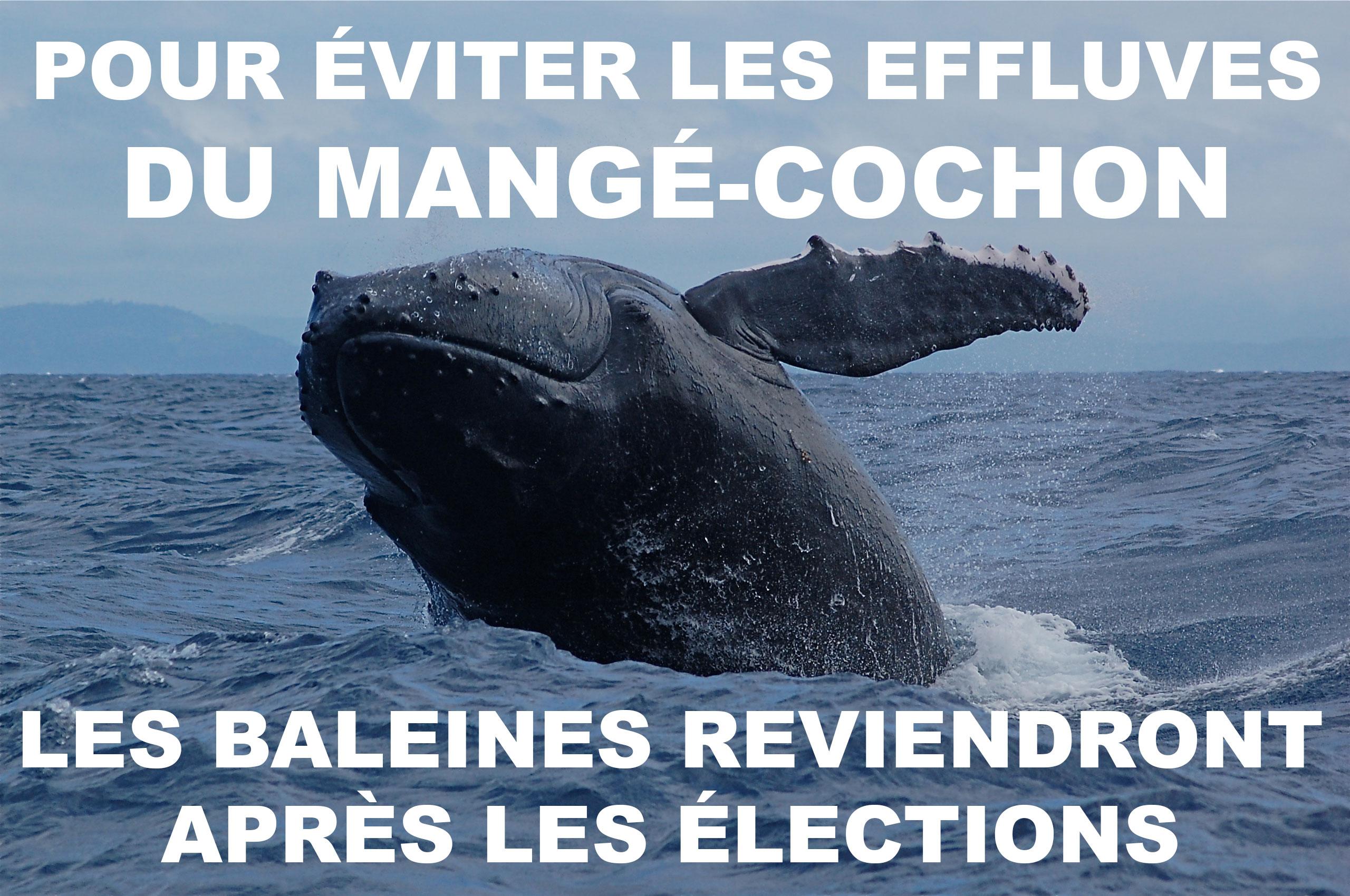 Adieu baleines !