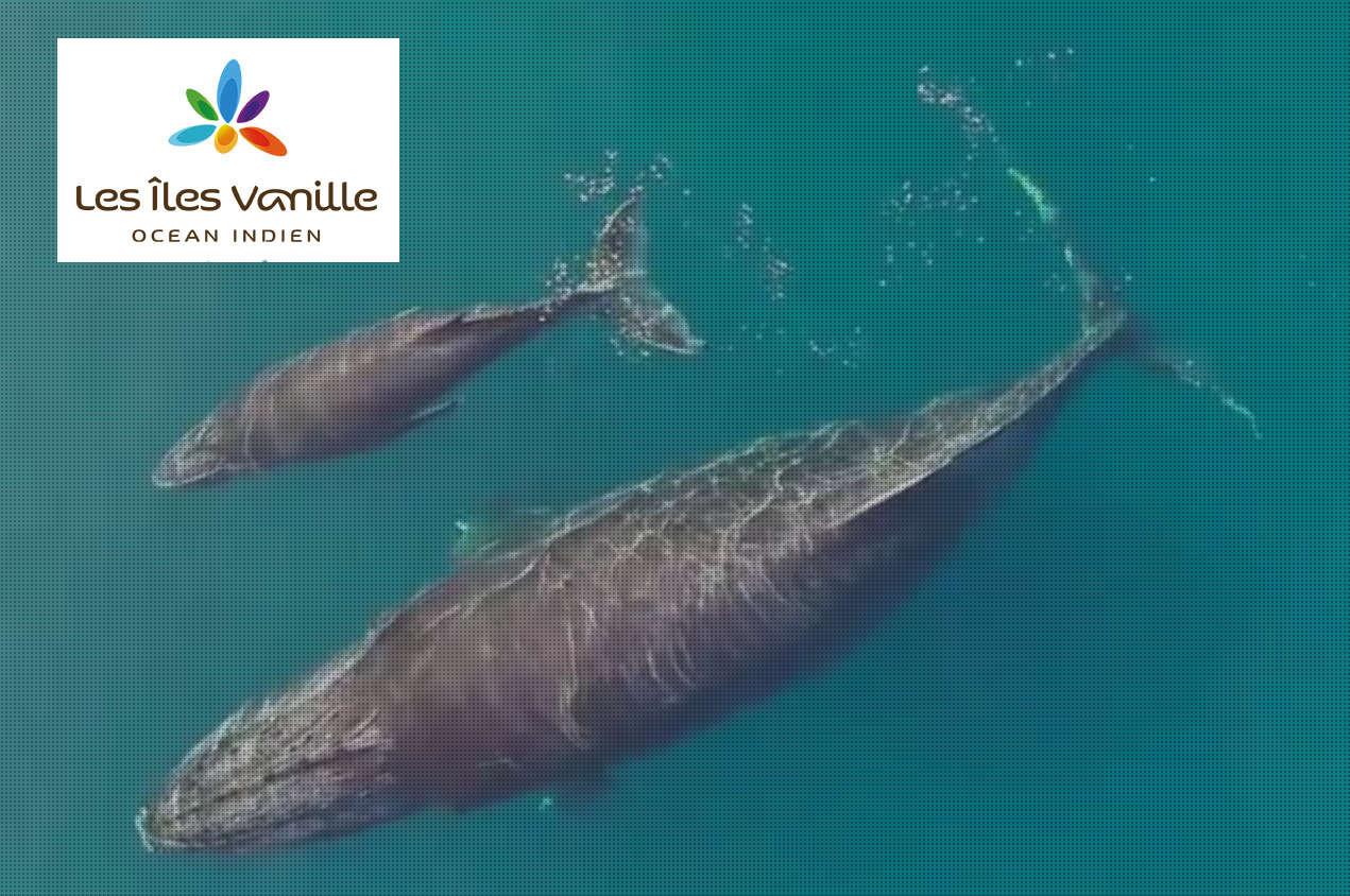 Les îles Vanille : C'est quoi ?