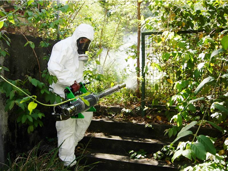 Épidémie de dengue aux Seychelles
