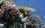 Le récif corallien réunionnais à l'honneur  les 15 et 16 décembre 2018