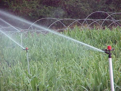 Menaces sur la filière canne – sucre : le PCR interpelle le Commissaire européen à l'Agriculture